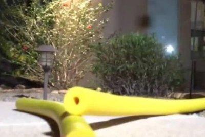 Arizona family finds rattlesnakes inside pool noodle