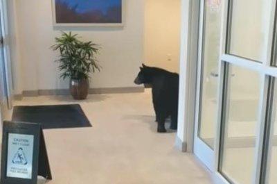 Bear wanders inside Tennessee hotel lobby