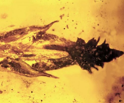 Amber fossil suggests dinosaurs may have eaten ancient LSD