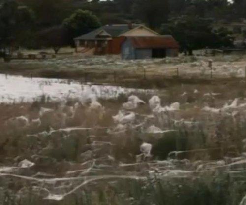 It's raining spiders in Australia