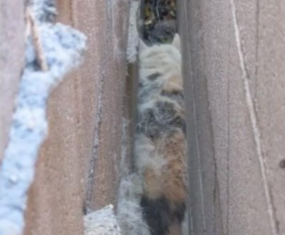 Cat rescued from narrow gap between brick walls in California