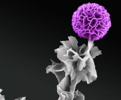 Organic semiconductor crystals grown vertically for first time
