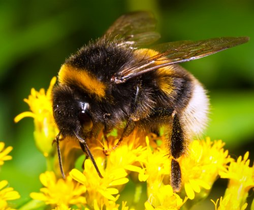 Bee populations face another threat: aluminum