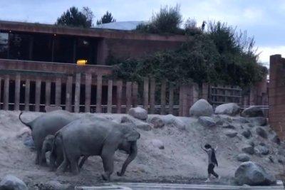 Man climbs into elephant enclosure at Denmark zoo