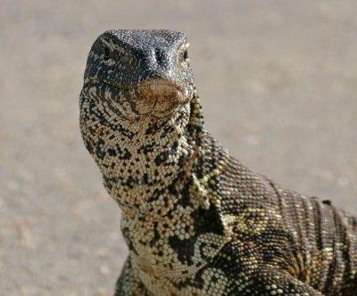 Louisiana man warns of large lizard on the loose