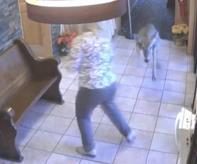 Deer goes on rampage in Indiana diner