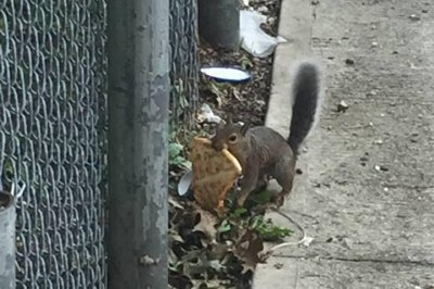 Snack-toting 'pizza squirrel' spotted in Washington, D.C.