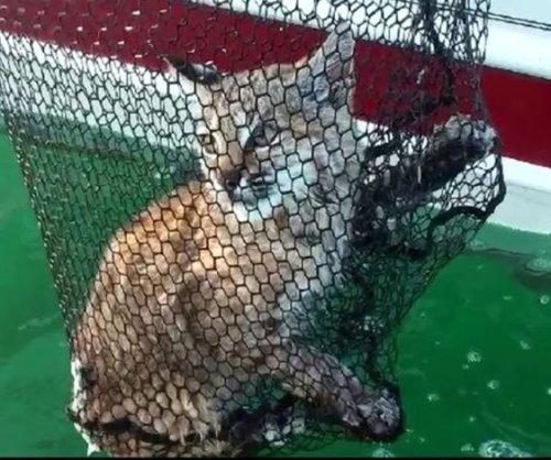 Fishing family rescues bobcat in Montana lake