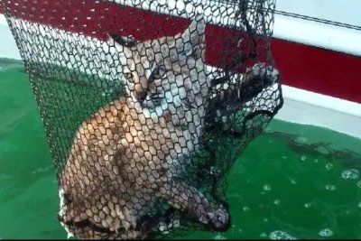 Fishing family rescues bobcat in Montana lake