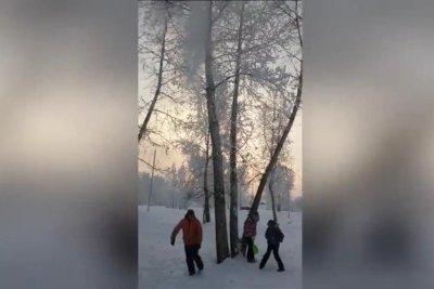 Prankster kicks tree to cover kids in surprising amount of snow