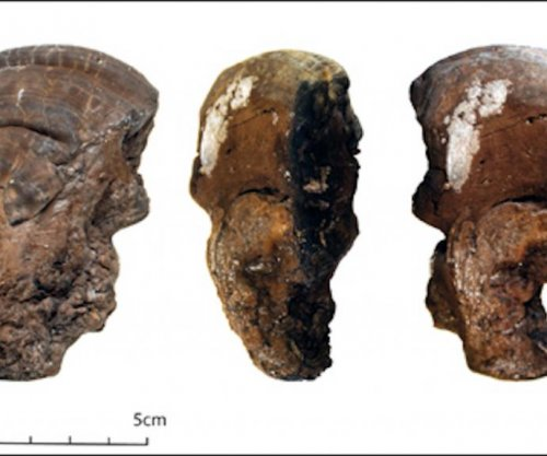 Earlier humans used dried fungi as tinder for fires during the Neolithic period