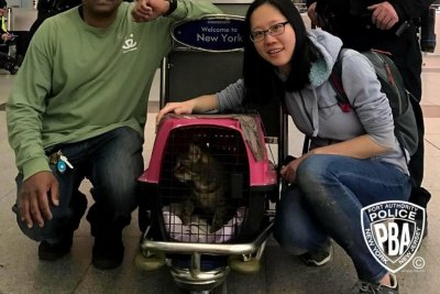 Escaped cat captured after a week wandering New York airport