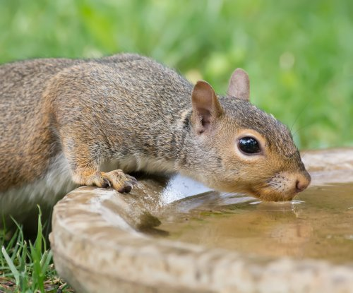 Personality goes a long way, even for squirrels