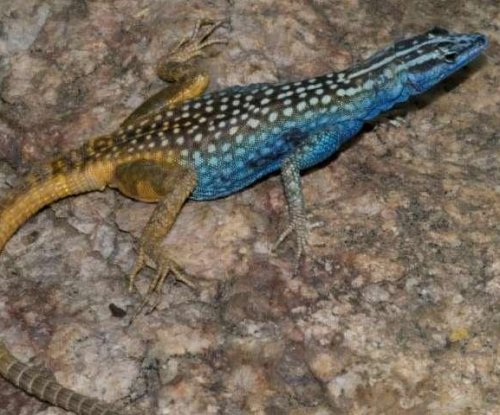Scientists name lizard species after Sir David Attenborough