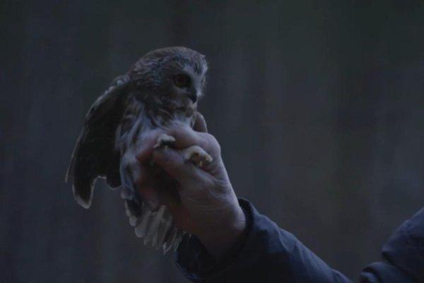 Watch: Rockefeller Center Christmas tree owl released back into the wild - UPI.com