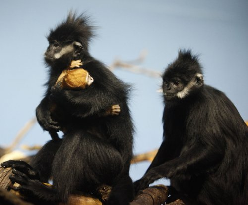Scientists sound alarm on plight of non-human primates