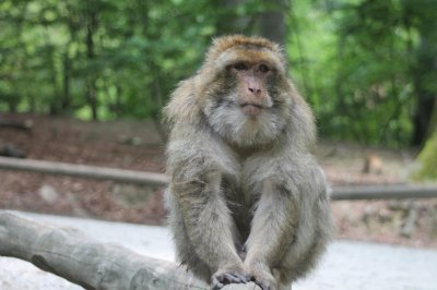 Gambling monkeys help reveal brain region linked to risky decisions
