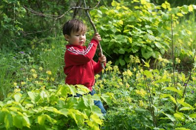 Bringing the forest to kids' daycare may boost young immune systems