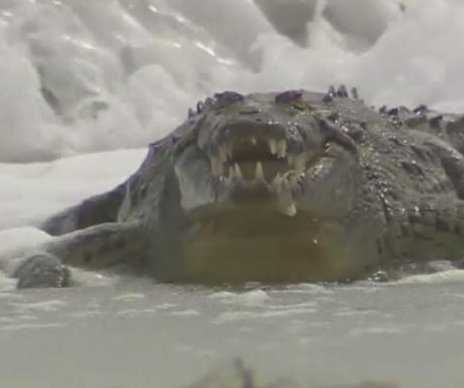 Crocodile captured after shocking tourists at Florida beach
