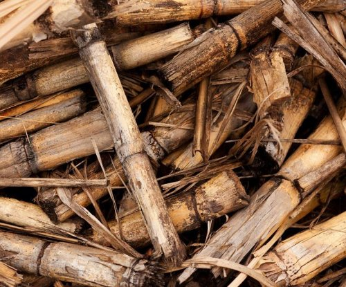 Brazilian biomass-powered electricity expands 11 percent over last year