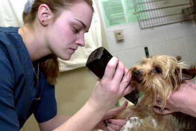 People willing to pay for pet health