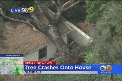 Giant tree falls on California couple's home