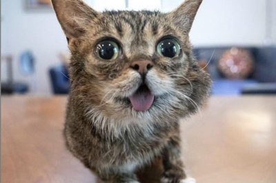 Lil Bub, famous Internet cat, dies at 8