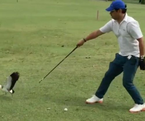 Golfer fights off pair of angry birds who mistook ball for egg