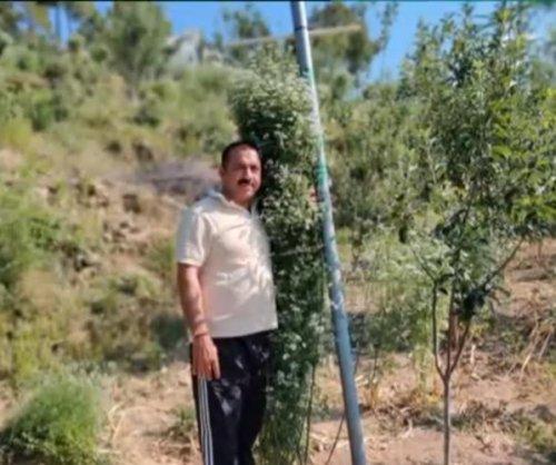 Farmer grows record-breaking 7.1-foot coriander plant