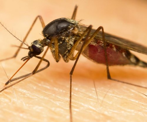 Researchers discover how malaria invades human liver