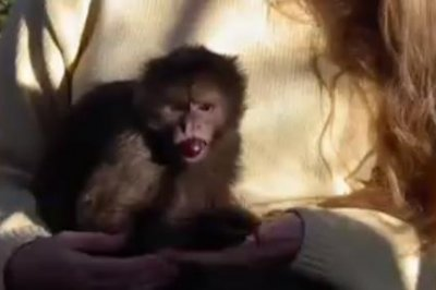 Monkey on the loose after sanctuary escape in British Columbia