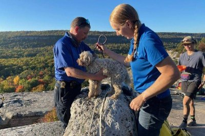 Dog rescued from cave in New York park after five days