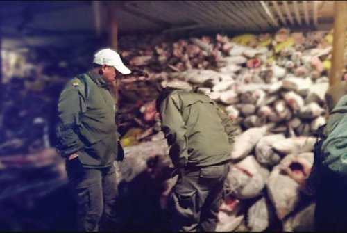 Ecuador navy arrests Chinese crew for fishing 'thousands' of sharks in Galapagos