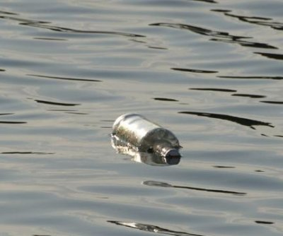 Message in a bottle travels from Germany to New Zealand