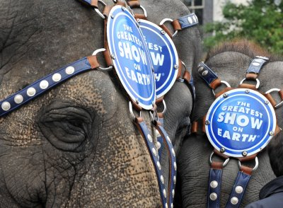 Los Angeles may ban circus elephants