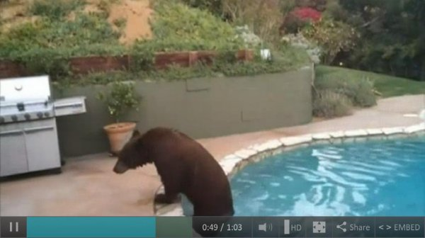 California bear beats the heat with dip in pool for Sierra madre swimming pool sierra madre ca