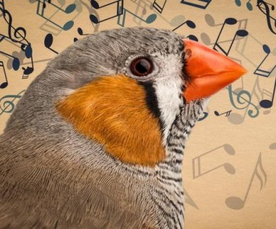 Study: Zebra finches learn songs from their fathers