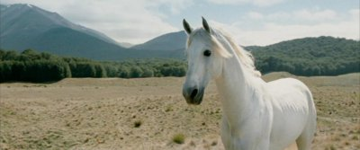 Blanco, the horse who portrayed Shadowfax in 'Lord of the Rings,' has died