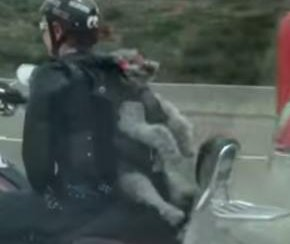 Dog strapped to motorcyclist's back on U.S. interstate