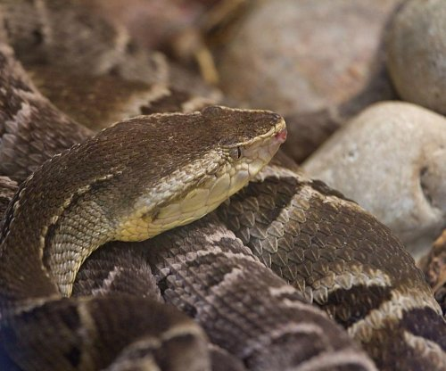 Snake venom may stop bleeding in surgeries for patients on blood thinners