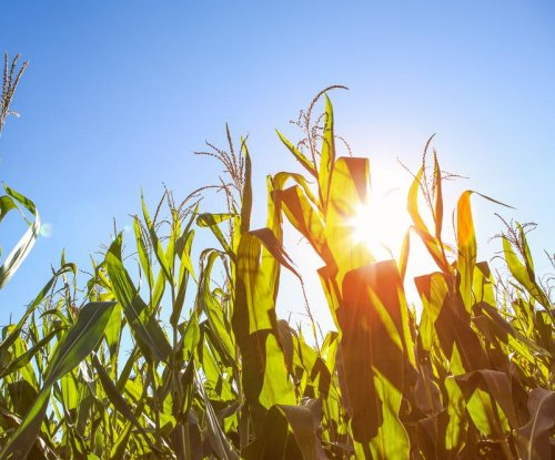 Scientists make fertilizer using the power of the sun