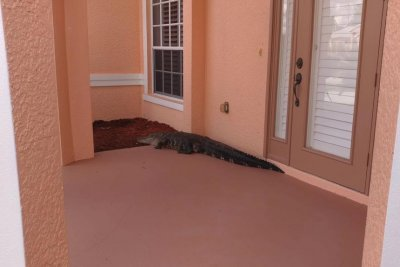 Police chase alligator away from Florida home's front door
