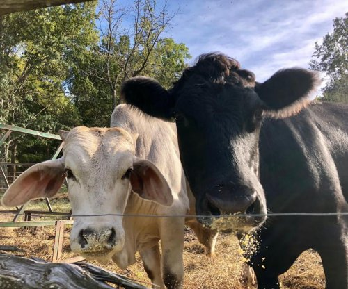 Government shutdown darkens programs that support farmers
