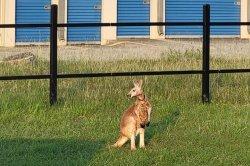Deputies wrangle loose kangaroo in Texas neighborhood