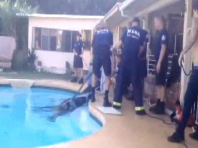 Video: Horse rescued from swimming pool