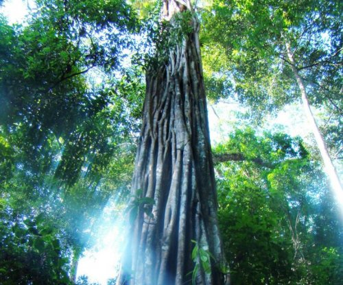 Study: Half of all Amazonian tree species threatened by deforestation