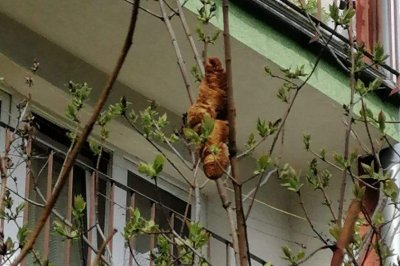 Animal rescuers find reported iguana in a tree was a croissant
