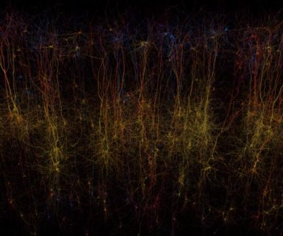 Researchers simulate part of a rat brain
