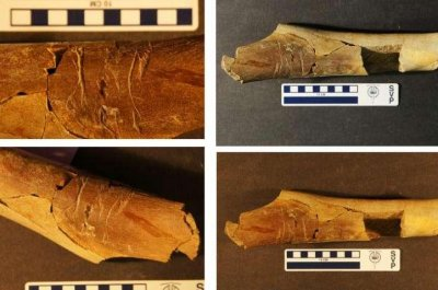 More evidence of tyrannosaur cannibalism