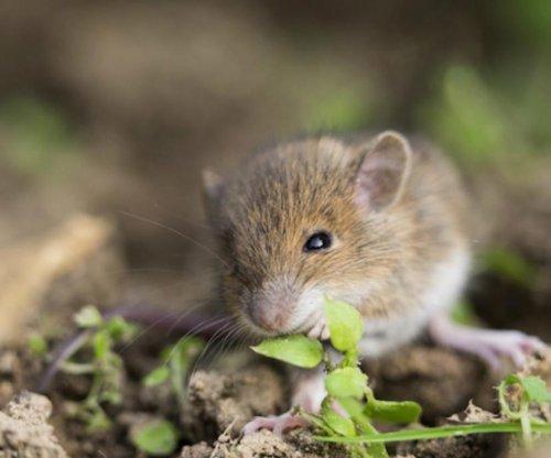 Mice raised communally fare better as adults
